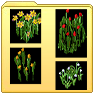 http://www.uo-pixel.de/grafiken/Fortuna_DNW-Fruehjahrsblueher.png