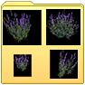 http://www.uo-pixel.de/grafiken/Fortuna_DNW-Lavendel.png