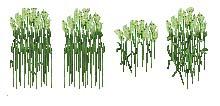 http://www.uo-pixel.de/grafiken/shidhun_schilf.jpg