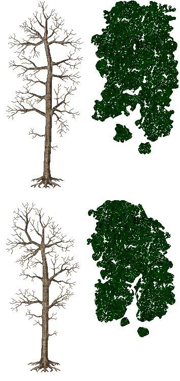 http://www.uo-pixel.de/grafiken/sunder_Kiefern.jpg