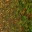 http://www.uo-pixel.de/map/e_tgras2forest.jpg