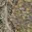 http://www.uo-pixel.de/map/eri_geroell_cave.jpg