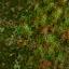 http://www.uo-pixel.de/map/eri_laubwald2osiwald.jpg