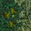 http://www.uo-pixel.de/map/eri_laubwaldb2grasb.jpg