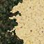 http://www.uo-pixel.de/map/eri_nadelwald2sand.jpg