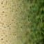 http://www.uo-pixel.de/map/eri_sand2osigras.jpg