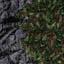 http://www.uo-pixel.de/map/eri_schwarzberg2nadelwald.jpg