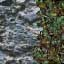 http://www.uo-pixel.de/map/me_berg_blau_wald3D.jpg