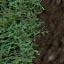 http://www.uo-pixel.de/map/niko_gras3D_dreck.jpg