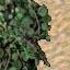 http://www.uo-pixel.de/map/niko_sand_urwald3D.jpg