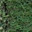 http://www.uo-pixel.de/map/niko_urwald3D_gras3D.jpg