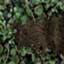 http://www.uo-pixel.de/map/niko_urwald3D_hang.jpg