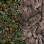 http://www.uo-pixel.de/map/niko_wald3D_berg3D.jpg