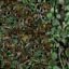 http://www.uo-pixel.de/map/niko_wald3D_urwald3D.jpg